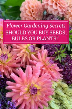 Gardening has few hard and fast rules. Though this ensures things never get boring, it also means there are usually several ways to get to the same result. Learn which plants are best started from seed vs from bulbs or plants. Starting Flowers From Seeds, Buy Seeds, Bulbs, Gardens, Plants, Lightbulbs, Planters, Tuin, Plant