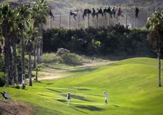 A golf game continues its course in the field of Melilla near the border of Morocco.  In the background, several immigrants are perched on the fence to try to move to Spanish territory.