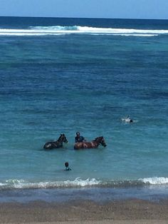 Bathing the horse in Sumba