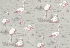 Flamingos (66-6042) - Cole & Son Wallpapers - Fantastic feature wall paper with white and pink flamingoes on a soft grey background. Please order a sample for true colour match.