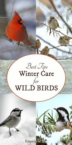What's the best birdseed for wild birds in the winter? If you love having birds in your garden all year-round, have a look at these tips for keeping them fed, safe, and happy as the snow comes down. Birds And The Bees, Kinds Of Birds, Love Birds, Beautiful Birds, Simply Beautiful, Beautiful Gardens, Nara, Design Thinking, Homemade Bird Houses