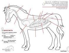 All the Bits 'n Pieces Colouring Pages [Part 2] – Equine Organ Anatomy  Practice your anatomy at home with pages that are easy to print and fill in.