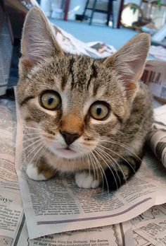 Bright eyed baby Florian. #tabby #cat #kitten