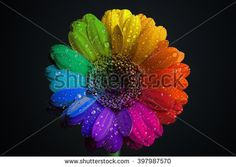 Free vector graphic: Colorful, Prismatic, Chromatic - Free Image on Pixabay - 1191018