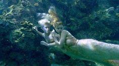mako mermaids - Pesquisa Google