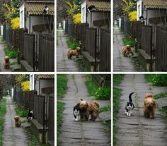 Multiply - Waiting for my Dear Friend - Click image to find more Animals Pinterest pins