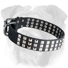 #Leather #English #Bulldog #Collar with Rust Proof Pyramids $39.90