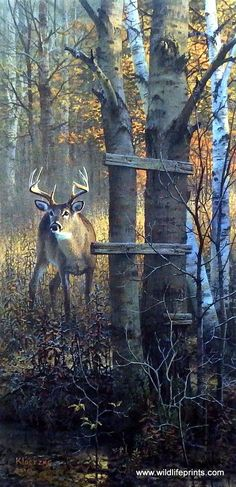 Artist Don Kloetzke Unframed Whitetail Deer Print The Buck Stops Here | WildlifePrints.com