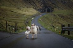 Hiking in the Faroe Islands (Hecktic Travels blog), includes a great pdf resource on many hikes