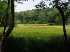 Wooden pathways #jenniferwarthan