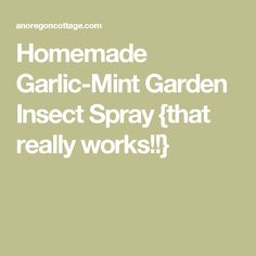 Homemade Garlic-Mint Garden Insect Spray {that really works!!}