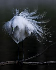 Egret, by Joan M.