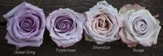 Color Study of Lavender and Purple Roses by Harvest Roses - http://www.harvestwholesale.com  Ocean Song, Purple Haze, Silverston, Nuage