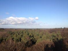Op de toren in het Doornse bos