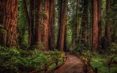 muir woods - Google Search