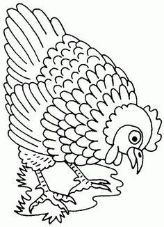 poule-12
