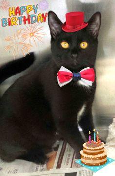 Happy 5th Birthday Montclair Township Animal Shelter!!!