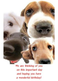 Dog Birthday Cards Facebook | Happy birthday card with dogs