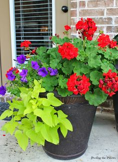 Poofing the Pillows: Sun planter with geraniums, petunias, and sweet potato vine.