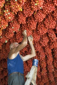 tomatoes  #Campania  #Italia #Italy #italianfood