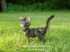 Needle Felted Kitten By Zada Creations....Sooo Cute!!!!!