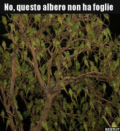 No, questo albero non ha foglie.. | BESTI.it - immagini divertenti, foto, barzellette, video Animals And Pets, Funny Animals, Italian Quotes, Funny Scenes, Funny Pins, Bellisima, Animals Beautiful, Animal Crossing, Wonders Of The World