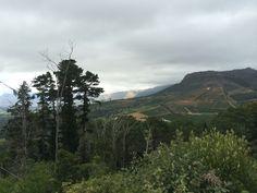 Sunday morning walk, Constantia Nek to Kirstenbosch Gardens.