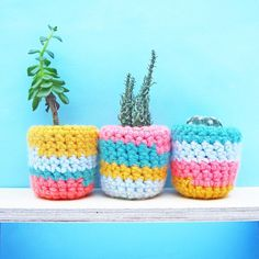 Cactus cosy plant pot, random colourful stripes, by Chimps Tea Party Fun Facts About Animals, Mini Cactus, Colorful Plants, Owl Print, Velvet Cushions, Ribbon Bows, Potted Plants, Different Styles, Cosy