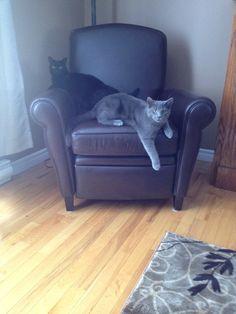 J'ai deux chats. Le chat noir s'appelle Kali et le chat gris s'appelle Rayne.