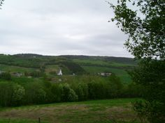 Todays view from the garden