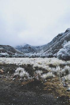 Winter colour...