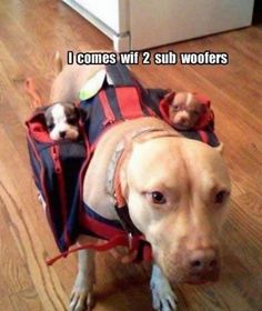 """What a great reason to upgrade your """"pittie sound system""""!"""