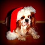 Enter your pets' cutest pet picture in our Facebook contest…  Are all the treats and goodies your doggie got for gifts already gone? We have a solution! Enter our Cutest Dog Photo Contest on Facebook to win your choice of a great prize from the D...