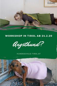 Auf diesem 5-teiligen Workshop gibt es viel Wissen und praktische Tipps rund um den Angsthund! Angst, Workshop, Animals, Dog Training, Handy Tips, Round Round, Knowledge, Life, Animais