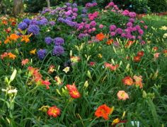 Daylilies and hydrangeas - two of my favorites.  I have a lot of both these flowers in my garden