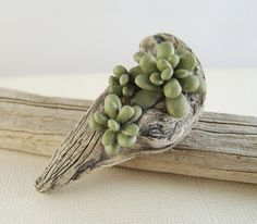 clay wood and succulent (Kim Cavender)