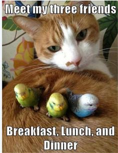 Funny Animal Pictures Of The Day – 28 Pics | Follow @gwylio0148 or visit http://gwyl.io/ for more diy/kids/pets videos