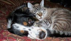 Cats & Dogs ;-) 4/14