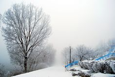 Just a foggy day Monochrome, Snow, Cold, Day, Winter, Photography, Blue, Outdoor, Winter Time