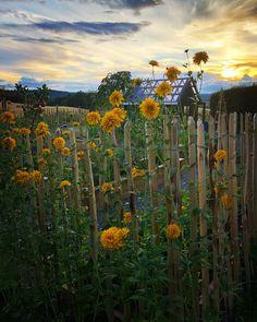 Fence, Vineyard, Garden, Plants, Outdoor, Instagram, Design, Outdoors, Garten