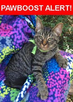 Please spread the word! Winston was last seen in Phoenix, AZ 85016.    Nearest Address: Near E Glenrosa Ave & N 24th St