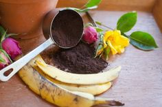 Make Roses bloom bigger and better with leftover Banana and Coffee Grounds. It helps keep them disease and pest resistant too.