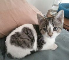 Adorable kitten with a heart spot!