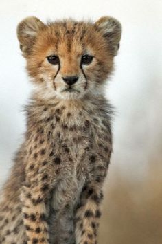 baby cheetah; Like that I can see the outline of the face. The fur is a different color around the eyes and mouth.