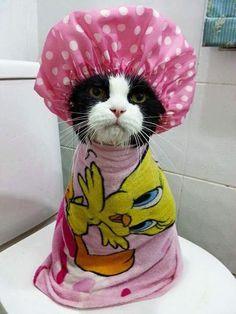 Estes Animais Não Veem a Hora de Tomar Banho!