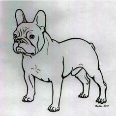Analysis of the French bulldog - cilveekss jimdo page!