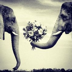 """""""I love flowers…and he nose that."""""""