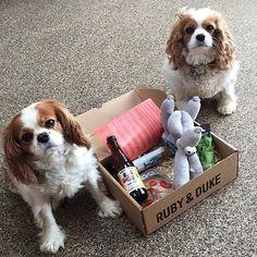 Two of our many happy Ruby & Duke #Dukebox dog toy and treat customers. www.rubyandduke.com  #dogsofinstagram #dogstagram #dogs #dogsrule #doglove #doglovers #doglife #dogoftheday #doggy #doglover #doggie #dogscorner #dogofinstagram #dogsofinsta #dogwalk #dog_features #doggies #dogsandpals #dogloversofinstagram #dogdays #dogsofinstaworld #dogcrushdaily #dogslover