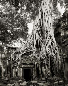 Ancient Trees series by Beth Moon