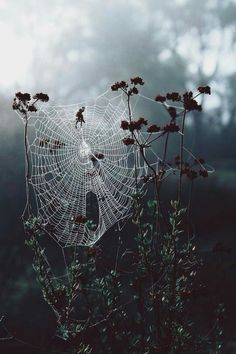 Find images and videos about photography, nature and spider on We Heart It - the app to get lost in what you love. Gothic Aesthetic, Witch Aesthetic, Autumn Aesthetic Tumblr, Dark Art Photography, Levitation Photography, Forest Photography, Exposure Photography, Winter Photography, Abstract Photography